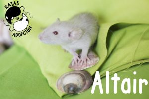 Altair-1024x683