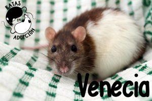 Venecia1-1024x683